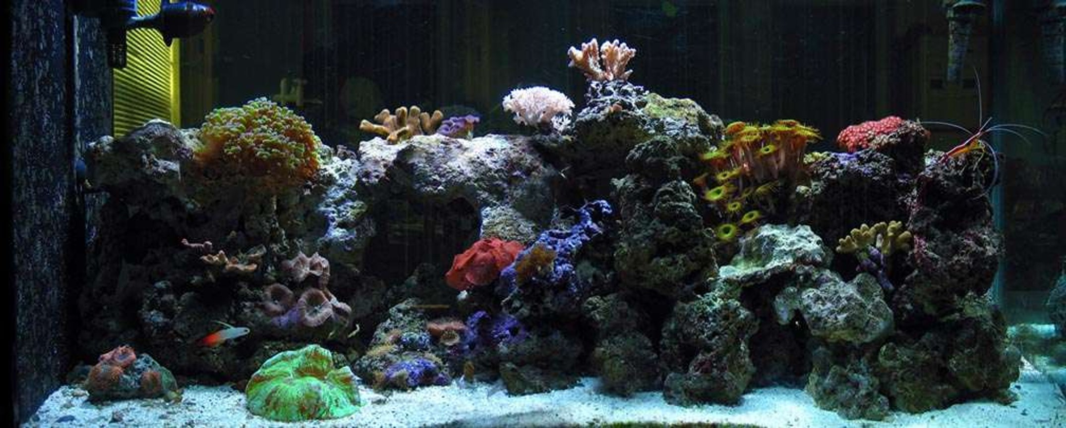 110 gallons reef tank (mostly live coral and fish) - panoramic view of my tank