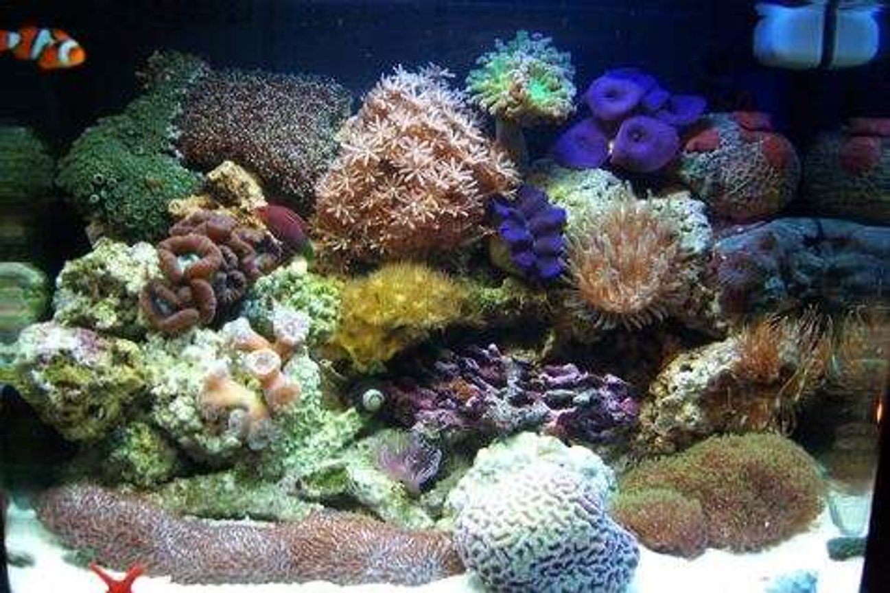 12 gallons reef tank (mostly live coral and fish) - My fish tank, 12 Gallon Aqua Pod
