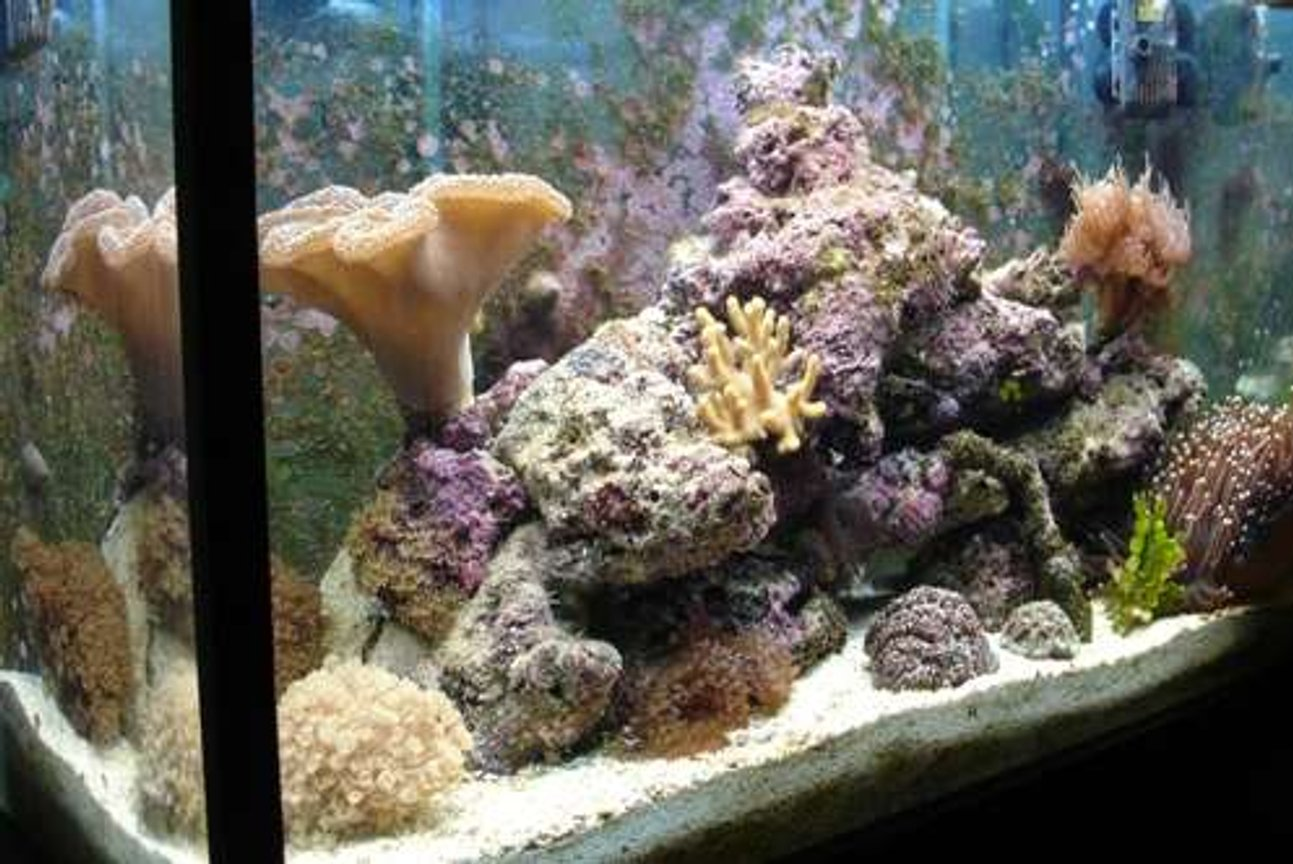 32 gallons reef tank (mostly live coral and fish) - Tank at 6 months