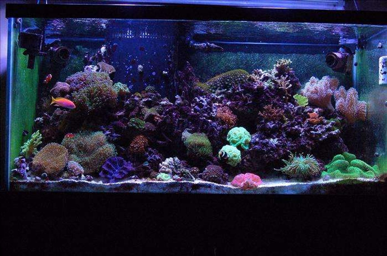 90 gallons reef tank (mostly live coral and fish) - My 90 gallon Mixed Reef