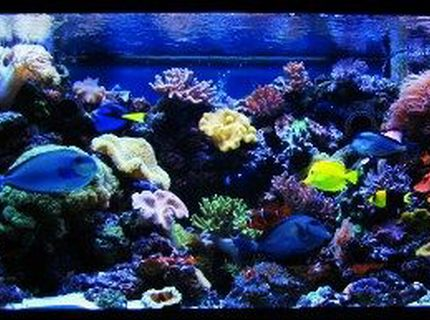 Rated #7: 210 Gallons Reef Tank - 210 Gallon reef aquarium