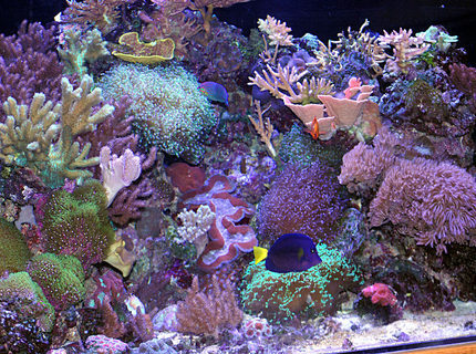Rated #4: 180 Gallons Reef Tank - right side of 180 pentagon