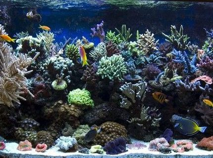 540 gallons reef tank (mostly live coral and fish) - tank05