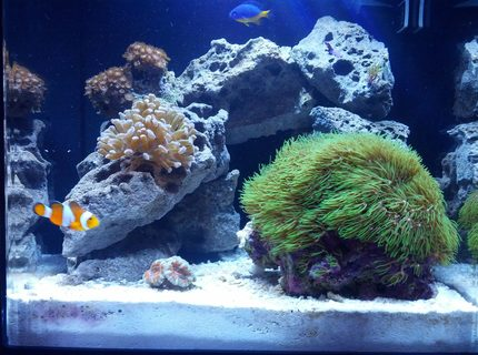 8 gallons reef tank (mostly live coral and fish) - 8 gal Nano