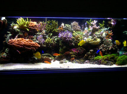 Rated #3: 225 Gallons Reef Tank - Main Tank: 225gl Starphire (60Lx36Wx24H) Euro-Braced Reef Tank 