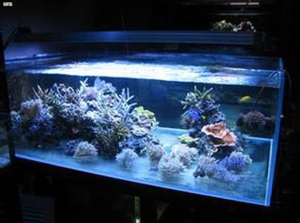 23 gallons reef tank (mostly live coral and fish) - 123