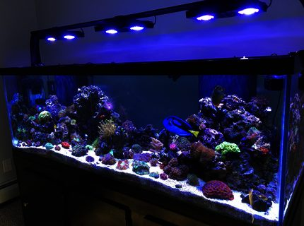 Rated #3: 180 Gallons Reef Tank - My 180 gallon reef tank!