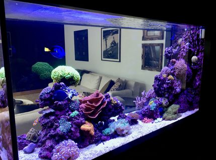 Rated #4: 90 Gallons Reef Tank - Reef it