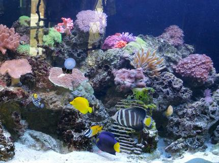 Rated #8: 260 Gallons Reef Tank - 260 gallon reef tank with various fish