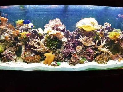 Rated #4: 120 Gallons Reef Tank - Drop of a ocean seen indoors