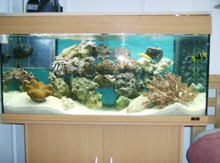 39 gallons reef tank (mostly live coral and fish) - Juwel 180 Reef Tank