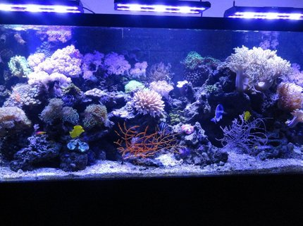 220 gallons reef tank (mostly live coral and fish) - 220 Gallon Reef Tank with Acan LED Lighting