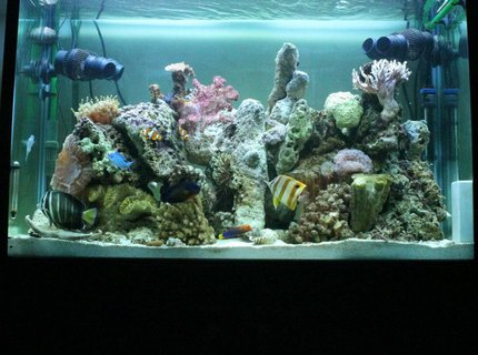 53 gallons reef tank (mostly live coral and fish) - June 2012