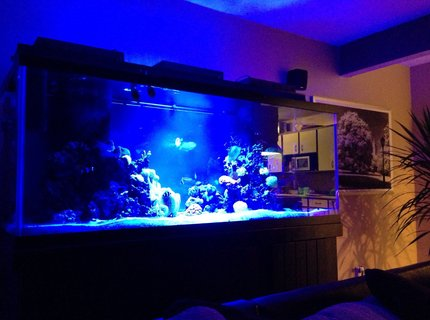210 gallons reef tank (mostly live coral and fish) - tank at night