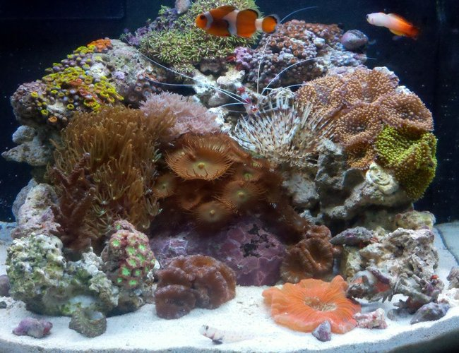 12 gallons reef tank (mostly live coral and fish) - 12gl JBJ Nano Reef