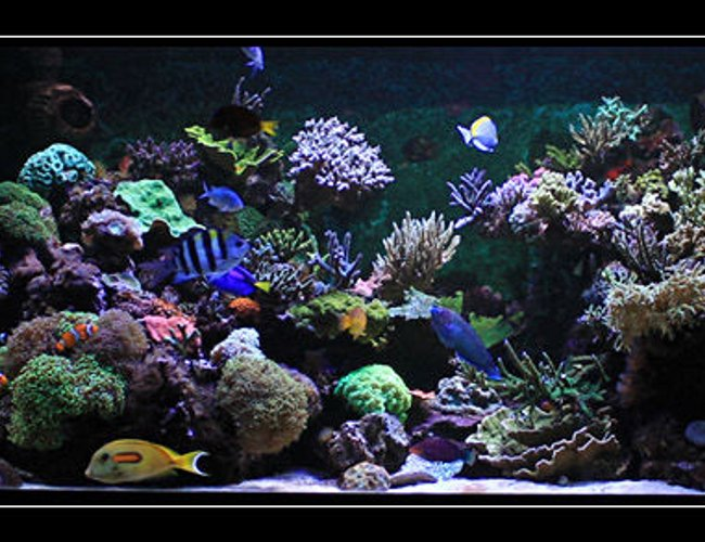 554 gallons reef tank (mostly live coral and fish) - my reef tank
