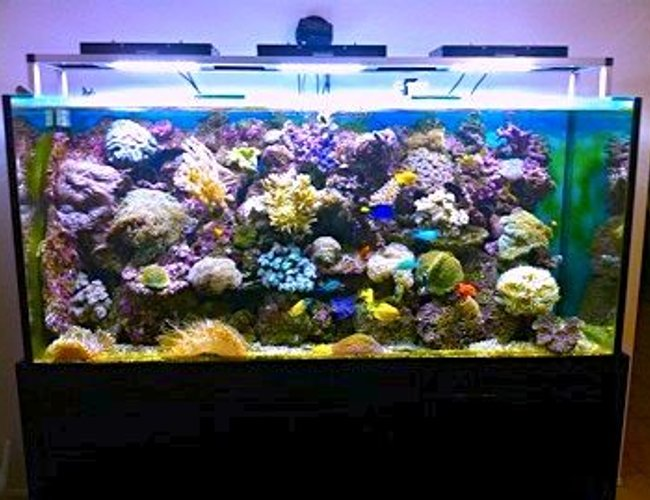 388 gallons reef tank (mostly live coral and fish) - reef cree leds