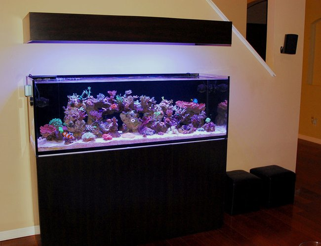 105 gallons reef tank (mostly live coral and fish) - 1 of 4. SEE PROFILE FOR ADDITIONAL IMAGES