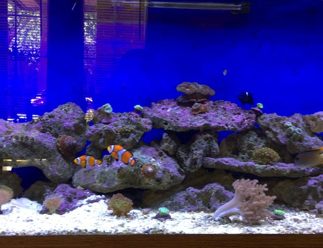 125 gallons reef tank (mostly live coral and fish) - 125 Gallon Reef Tank