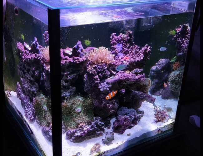 52 gallons reef tank (mostly live coral and fish) - Cube corner tank
