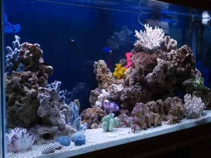 Rated #55: 90 Gallons Reef Tank - Misc.