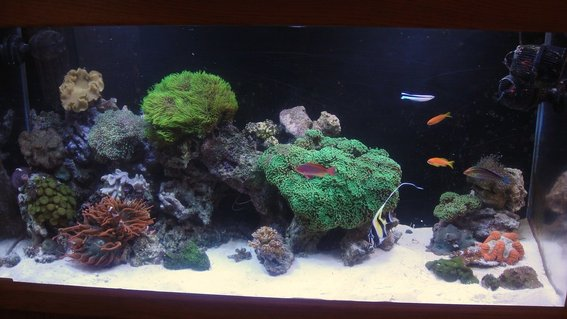 Rated #53: 90 Gallons Reef Tank - 2010 reef
