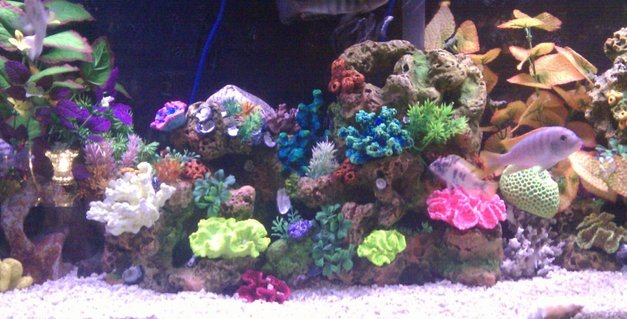 Rated #89: 55 Gallons Reef Tank