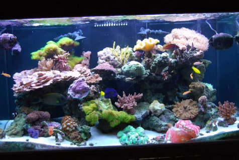 Rated #9: 120 Gallons Reef Tank - 120g reef tank