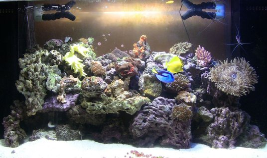Rated #65: 90 Gallons Reef Tank - 90g truvu acrylic tank with 30g show refugium housing seahorse and several variety of pods. 2x 150 15k and 20k mh. Live rocks/sand/argonite..sps, lps, polyps, soft corals, mushroom, and anemone.