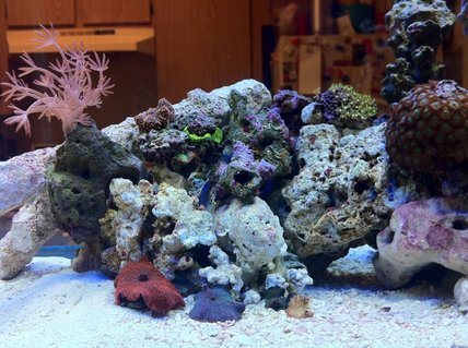 Rated #82: 10 Gallons Reef Tank - 6 week old nano