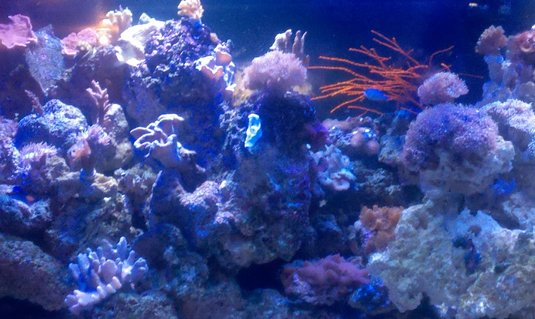 Rated #83: 180 Gallons Reef Tank - my reef