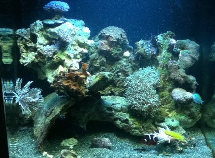Rated #88: 28 Gallons Reef Tank - Reef tank