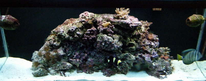 Rated #90: 55 Gallons Reef Tank - 55 gallon