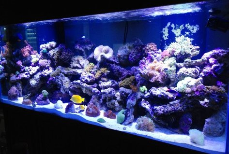 Rated #10: 220 Gallons Reef Tank - My thing that gives me a quiet mind