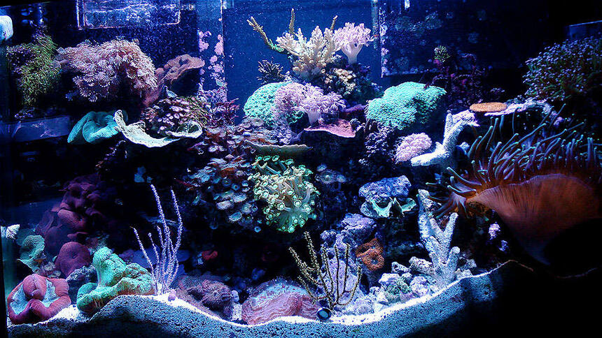 Rated #9: 46 Gallons Reef Tank - 46 Gallon Bow