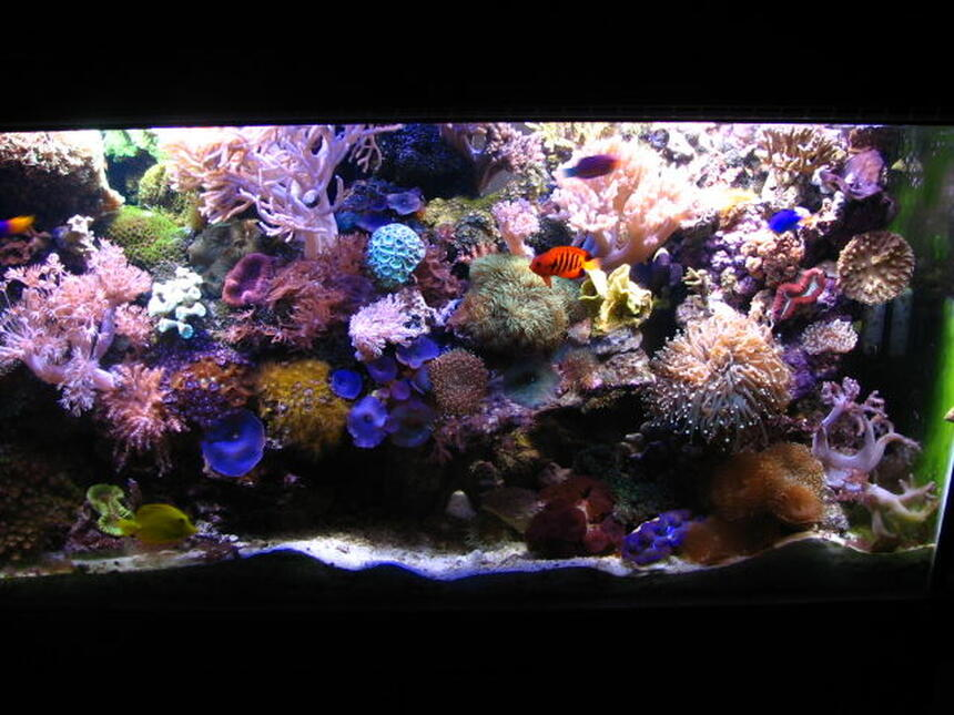 Rated #6: 90 Gallons Reef Tank - Whole Tank