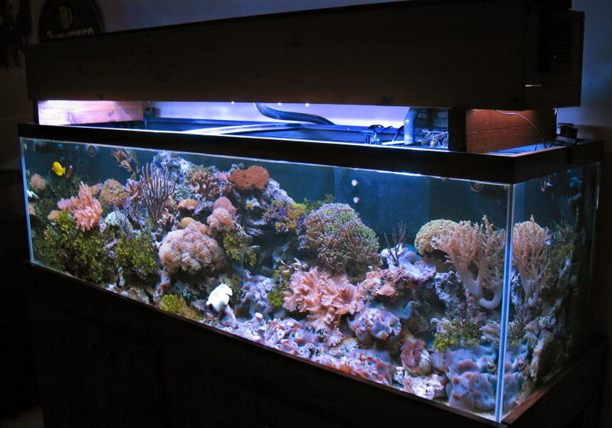 Rated #10: 125 Gallons Reef Tank - 125 gallons reef