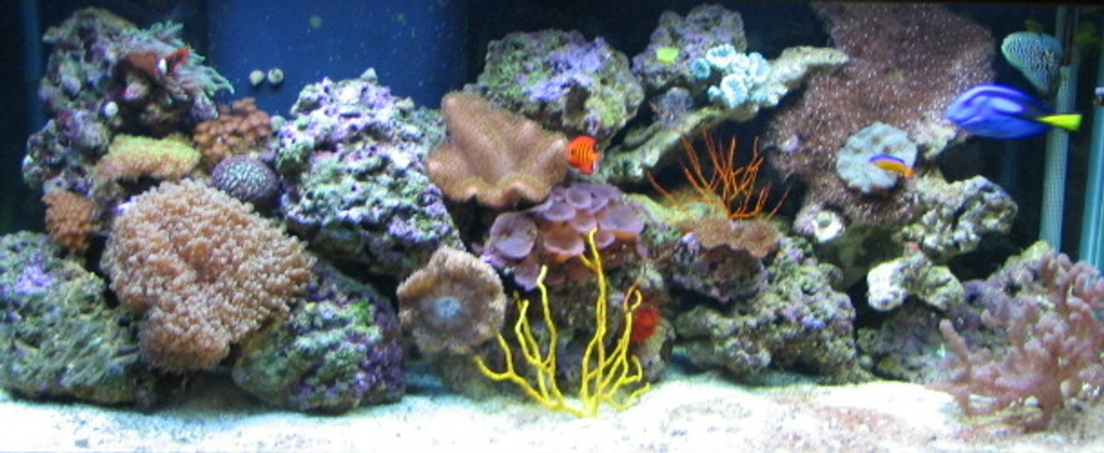 Rated #41: 75 Gallons Reef Tank - 75 gal reef tank