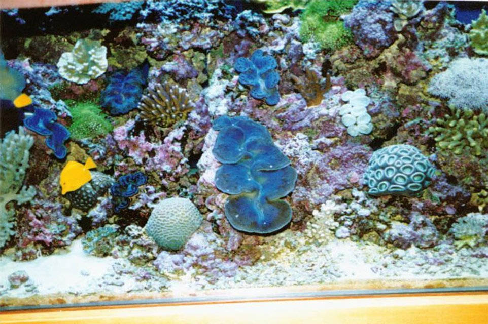 Rated #76: 175 Gallons Reef Tank - 175 gal bowfront