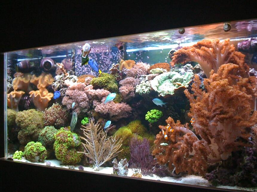 Rated #8: 90 Gallons Reef Tank - 90 gallon reef tank