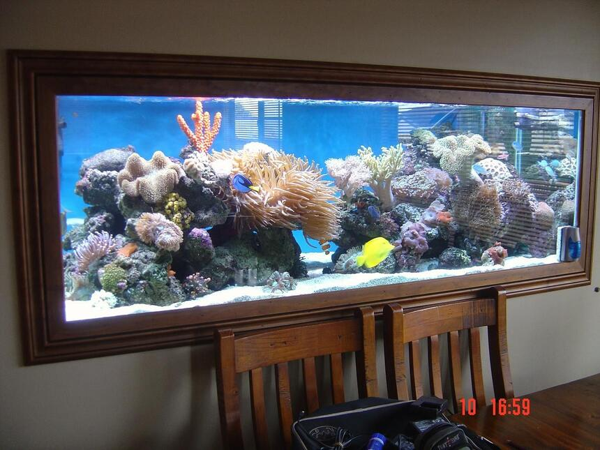 Rated #7: 185 Gallons Reef Tank - my tank