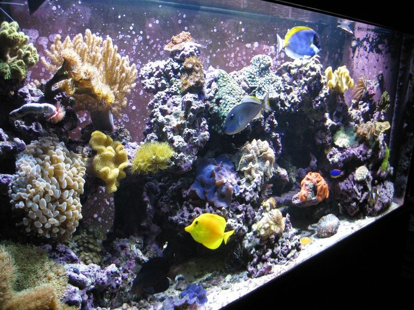 Rated #23: 120 Gallons Reef Tank - Left Angle 120g Reef