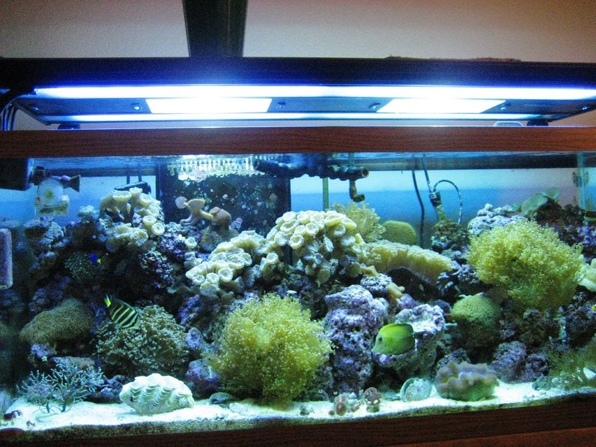 Rated #82: 75 Gallons Reef Tank - my tank
