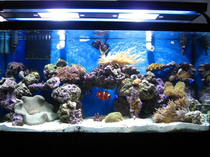 Rated #72: 90 Gallons Reef Tank - 90 gallon