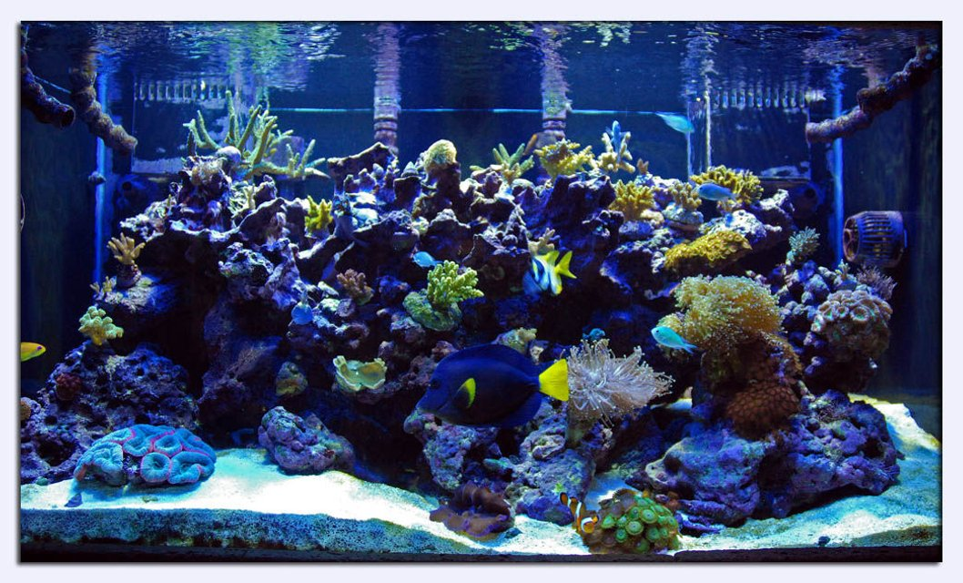 Rated #11: 120 Gallons Reef Tank - full tank shot