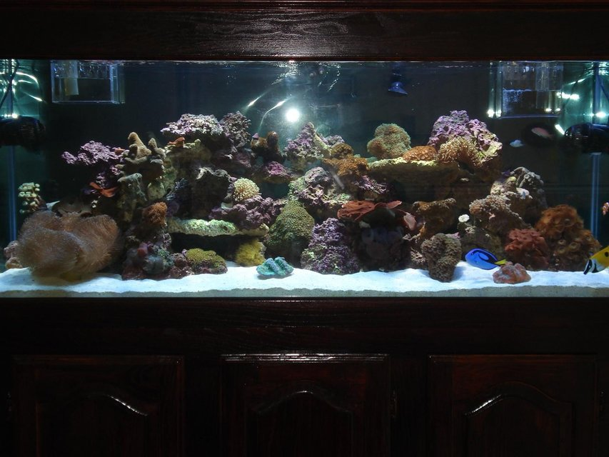 Rated #53: 110 Gallons Reef Tank - 110 G Mixed Reef Tank