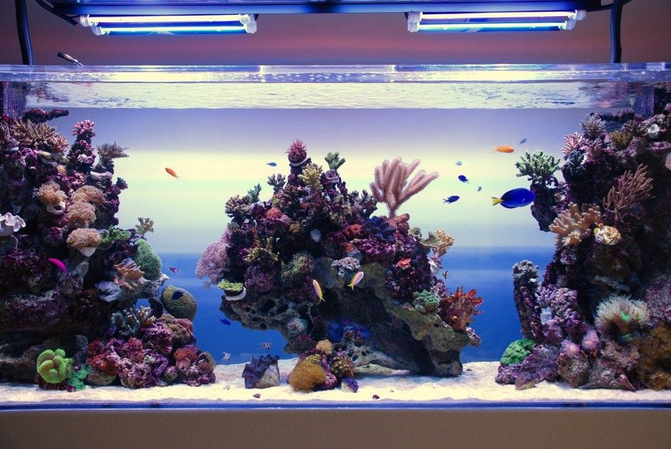 Rated #1: 350 Gallons Reef Tank - Reef tank