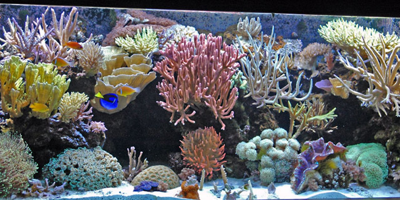Rated #32: 225 Gallons Reef Tank - My 225 gallon SPS dominated Mixed Reef