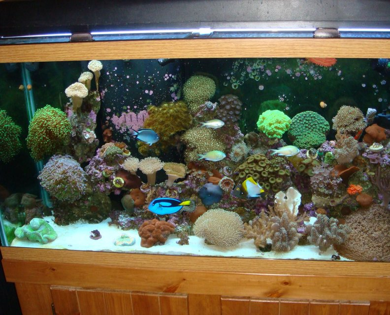 Rated #32: 90 Gallons Reef Tank - full view