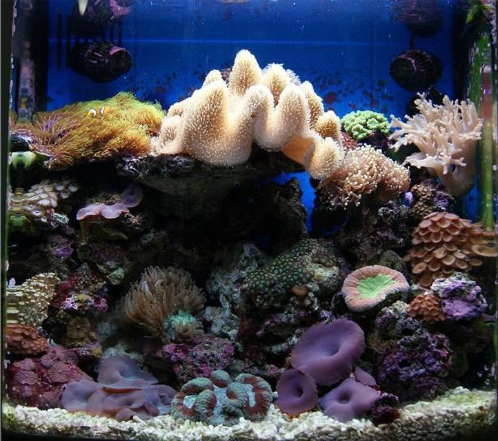 Rated #12: 11 Gallons Reef Tank - Nano Reef